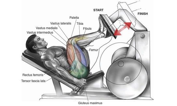 Illustration Of Leg Press