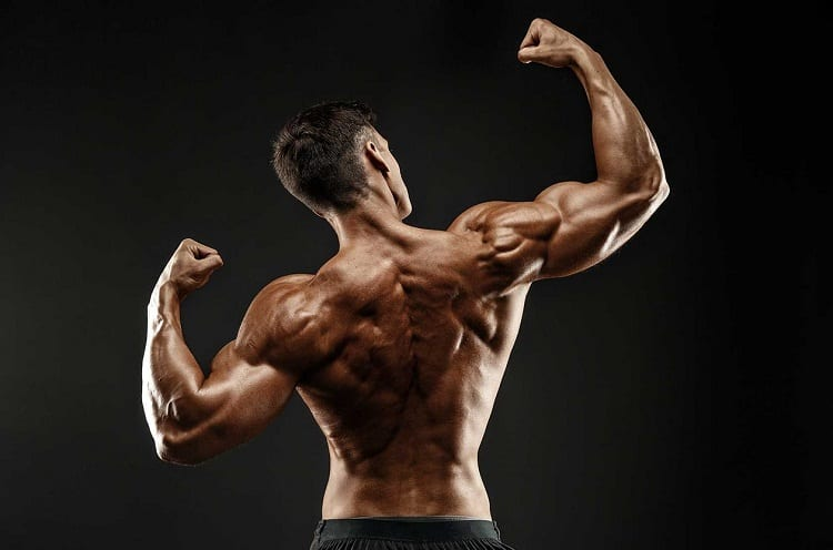 pullups biceps benefits